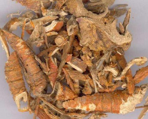 vị thuốc tang-bach-bi