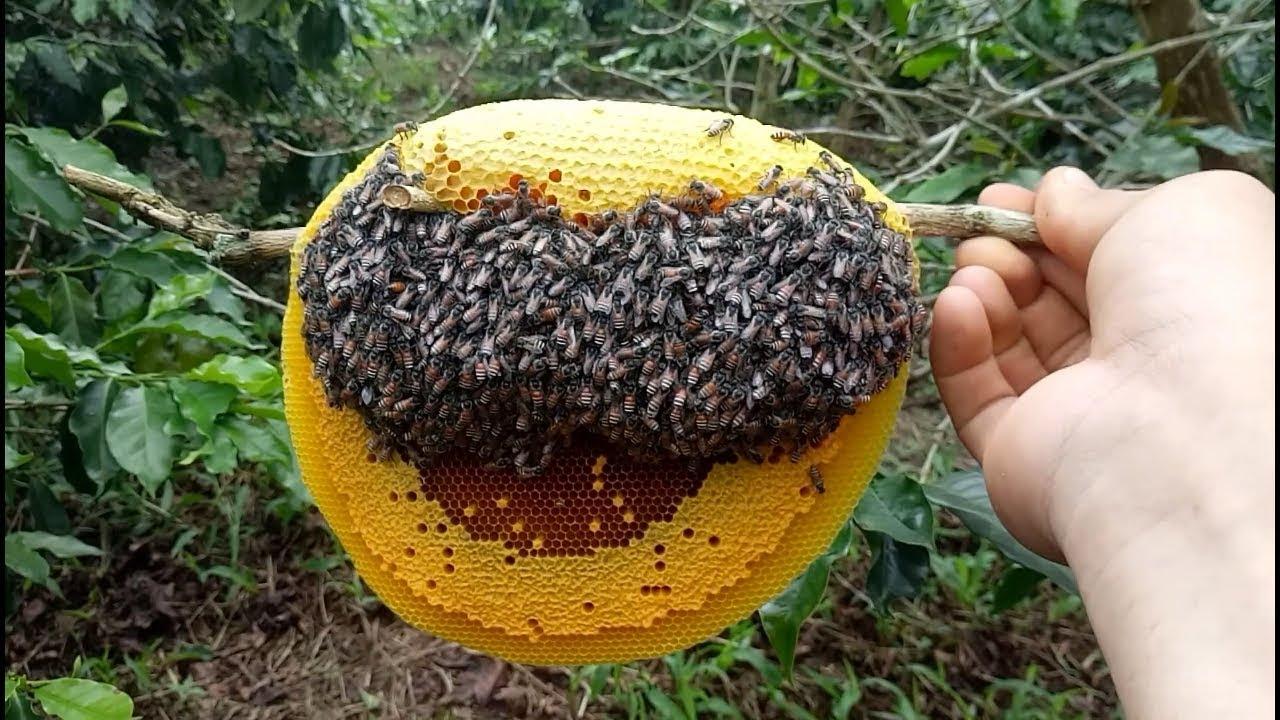 Tổ ong mật