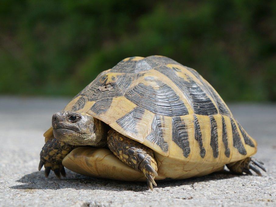 Con rùa