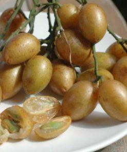 Quả hồng bì ( Giổi )